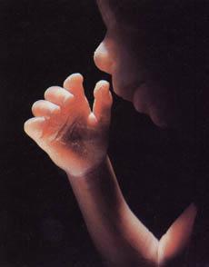 10 - 18 тиждень вагітності фото 13